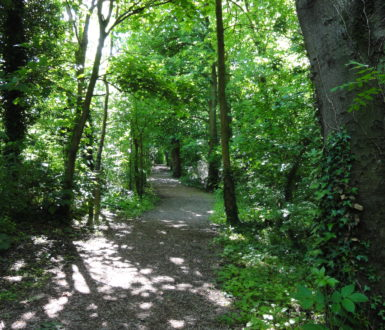 Photo of The Spinney path