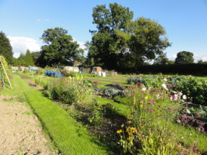 Svm21 Photo Of Allotments In Summer